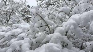 Snow day sends Vancouverites to social media
