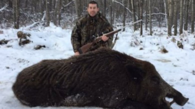 'That's a lot of sausage': Monster boar makes big ... Giant Wild Boar Photos