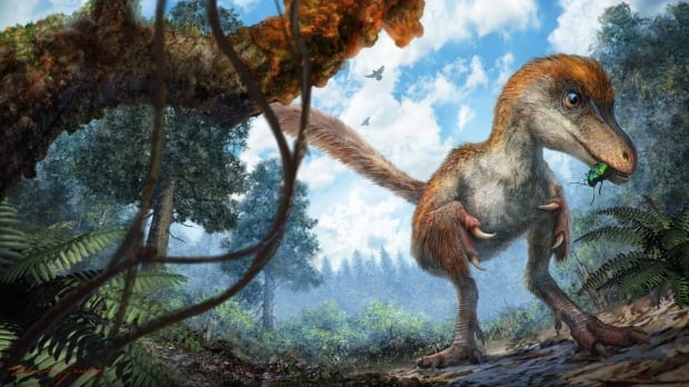 Feathered dinosaur tail fragment trapped in amber amazes scientists