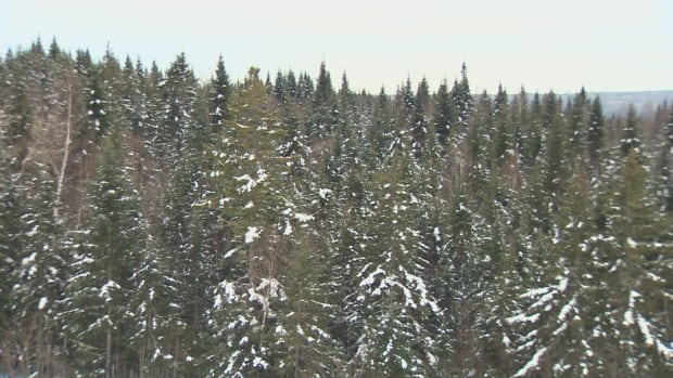 New Brunswick forests