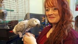 Hundreds of homeless B.C. parrots still need help