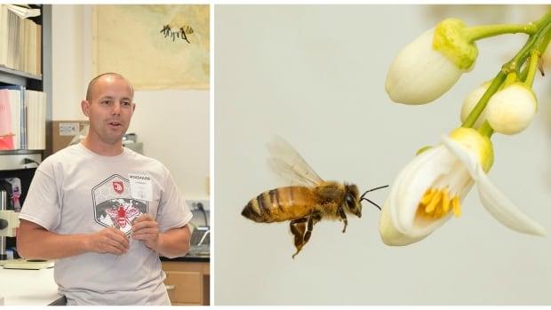 b hopkins bee
