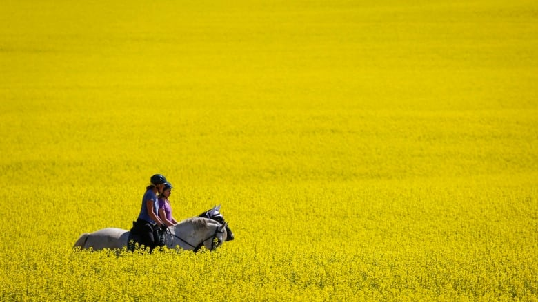 SARM presses for more federal action on China canola impasse