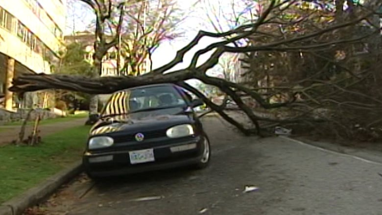 A 2006 Windstorm On BCs South Coast Toppled Trees And Caused Widespread Damage Throughout The Region CBC
