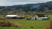 Saanich Farm