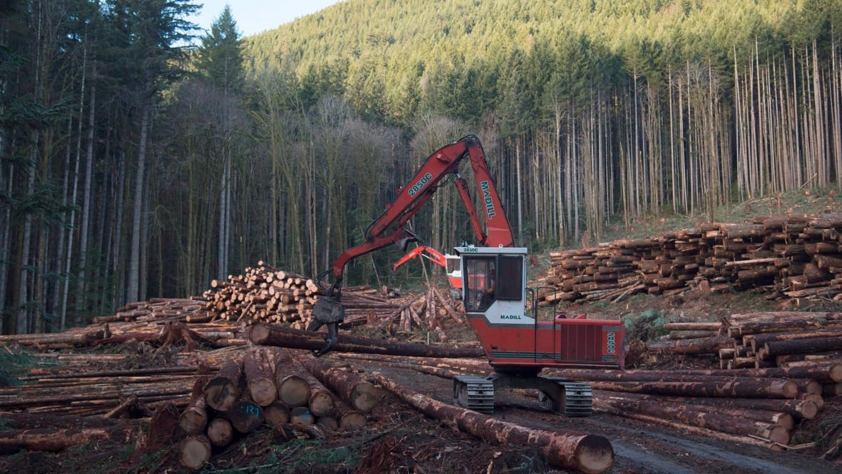 Lumber industry, B.C. government to launch softwood lobbying campaign