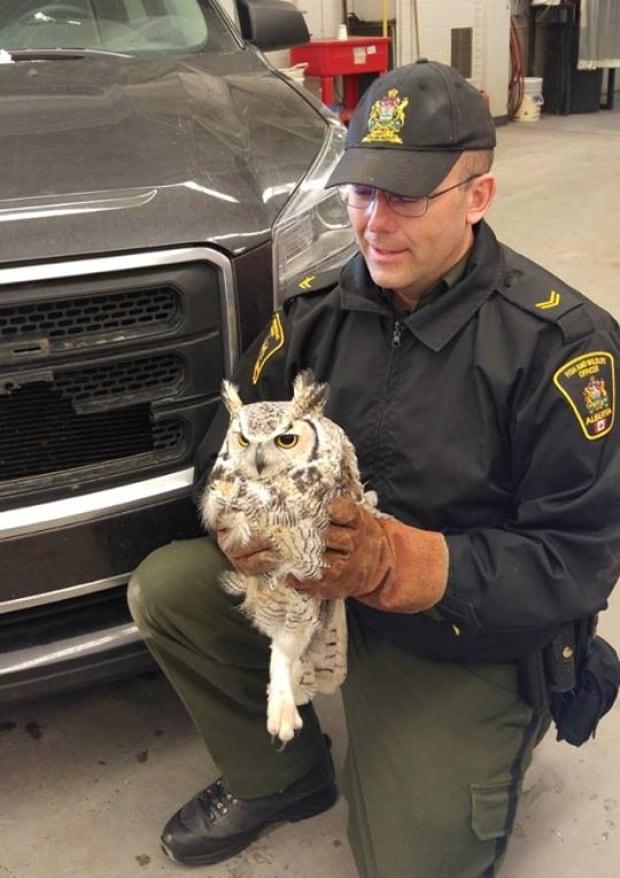 Camrose owl rescue