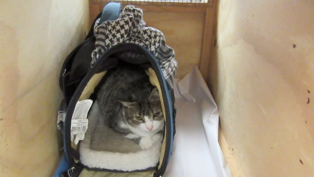 Authorities: Canadian tried to smuggle cat into New Zealand