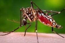 Zika-2016