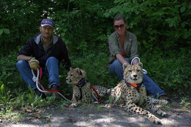Earl pfeifer carol plato cheetah b.c.