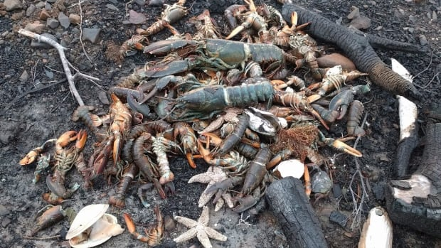Dead sea creatures are shown washed ashore in Savary Provincial Park near Digby, N.S., on Monday.