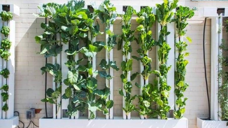 New Vertical Garden Allows Cloverdale Food Bank To Serve Up ...