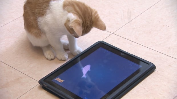 iPads for Cats