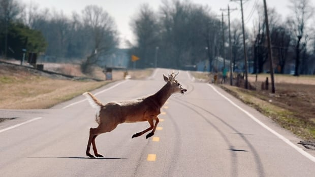 Provincial police are warning motorists to be on the lookout for deer distracted by the breeding and hunting seasons after 11 collisions involving the animals were reported in Lambton County over the weekend.