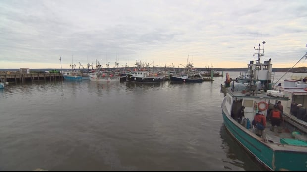 A Digby, N.S., scallop exporter says he has received calls from customers in the U.S. after the story of the Bay of Fundy fish kill was picked up internationally.
