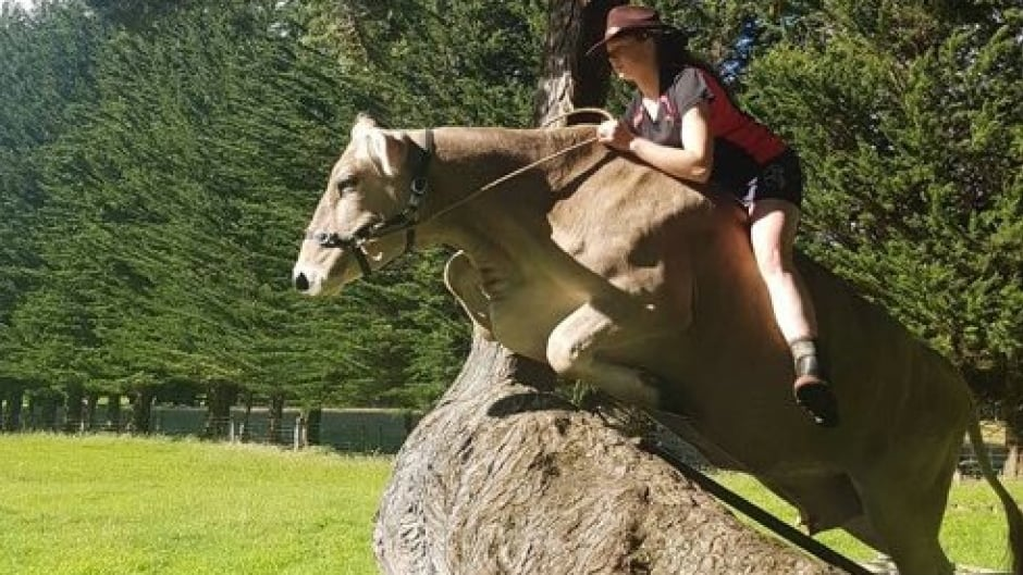 Hannah Simpson riding her cow, Lilac.