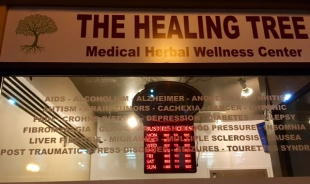The Healing tree in St. John's
