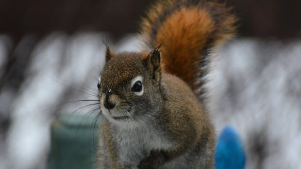 Alectra Utilities crews had power restored in about 45 minutes Friday morning after a squirrel knocked out power in central Hamilton.