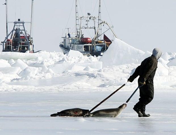 Seal hunt 2005