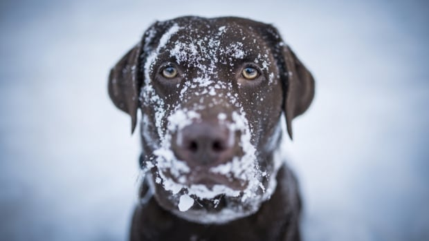 Are you happy about the potential for snow, or are you more like this dog?