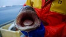 ENVIRONMENT-FISH/
