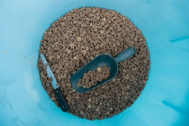 Urchin feed from Urchinomics