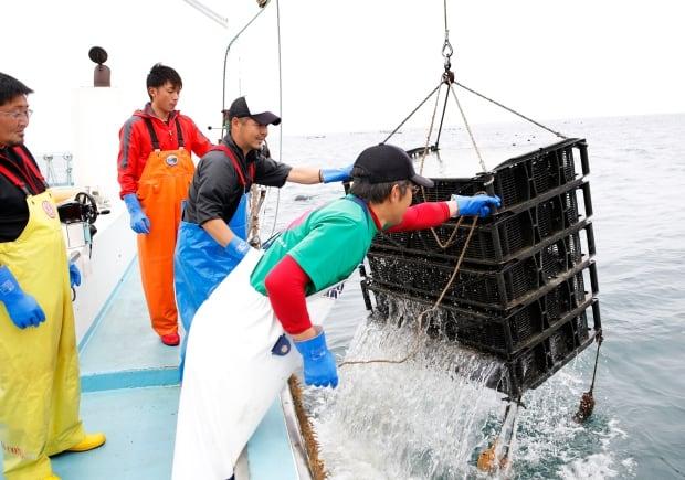 Urchin farming at sea Miyagi Japan