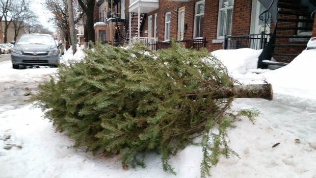 This tree on Laval Avenue is off the sidewalk and on its side, waiting for pick-up.
