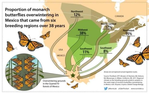 Monarch butterfly breeding