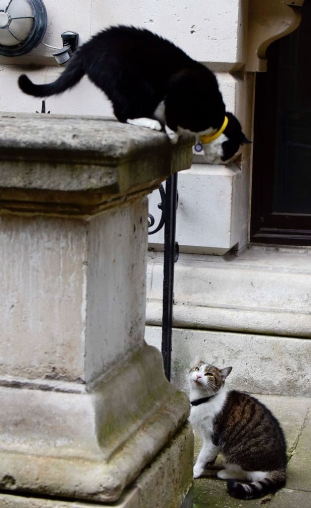 Larry and Palmerston