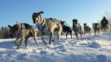 cbc-North-Dogsledding-Fort-Providence