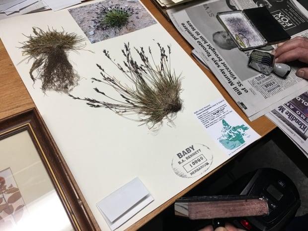 Bruce Bennett's herbarium