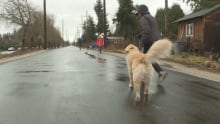 Pedestrians on temporary pathway on arbutus greenway