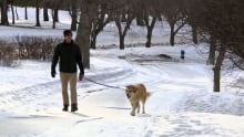 Dog in Regina' Wascana Park
