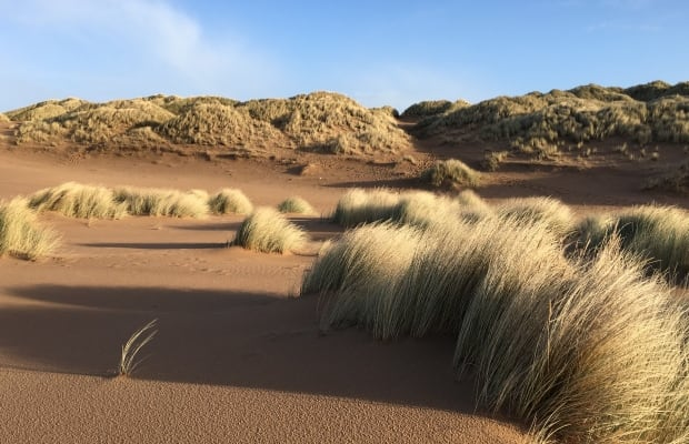 Scottish sand dunes
