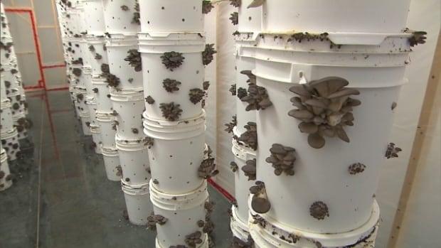 mushroom grow