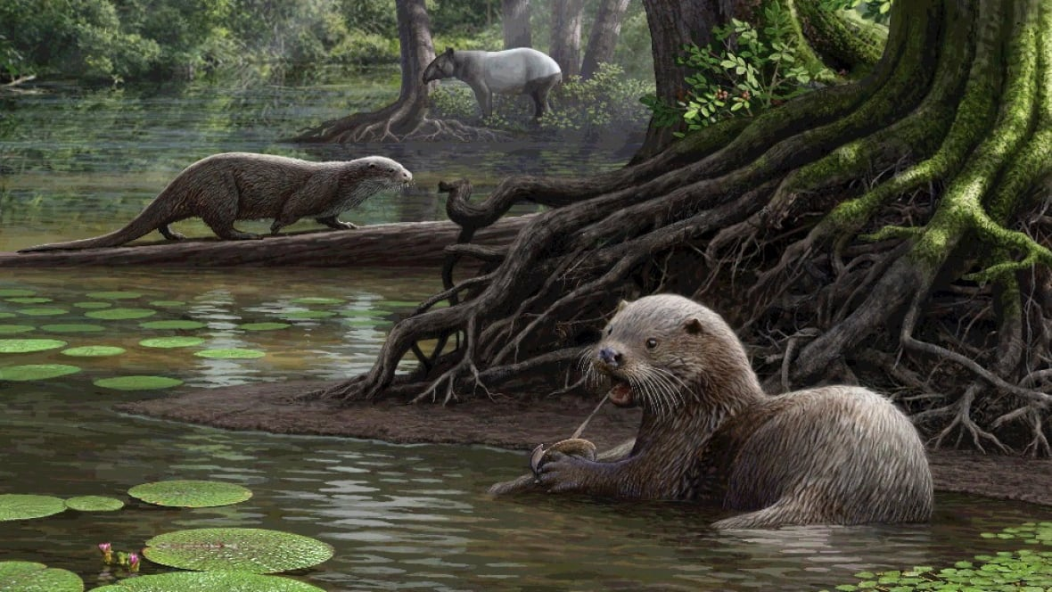 Researchers unearth fossils of giant otter in China