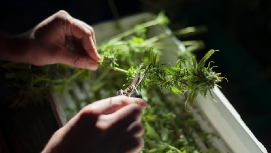 There are growing calls to pardon minor pot convictions, particularly for people in racialized communities that have most strongly felt the effects of the war on drugs.