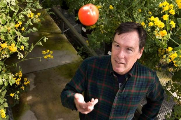 Harry Klee Tomatoes