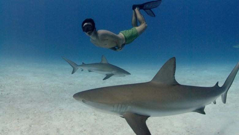 He created a great momentum for sharks worldwide': Rob Stewart's
