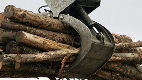 Province 'continuing to work on' 2015 recommendation designed to help private woodlot owners