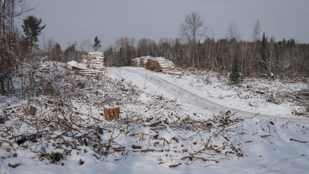 Opponents of clear cutting want the province to live up to the promise in its natural resources strategy to reduce the practice by 50 per cent.