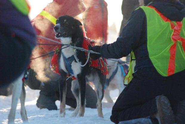 Yukon-Quest-North-dog-blankets-3