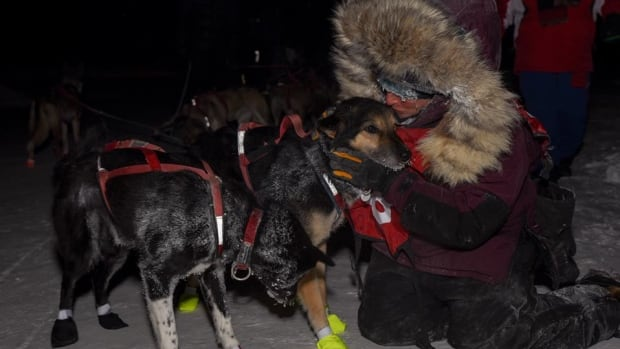 Michelle Phillips won the Yukon Quest 300 in February before heading to Alaska for the Iditarod.