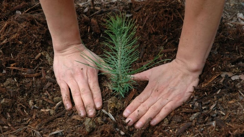 Funding for tree planting 'phenomenal' for Chatham-Kent