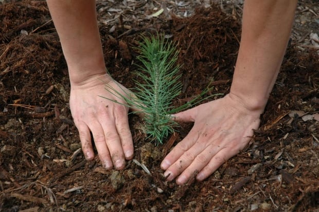nb-tree-planting