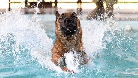 AUSTRALIA MILITARY DOGS