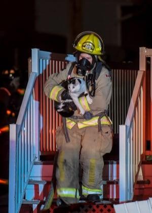 Clairmont fire cat rescue