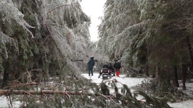 Kouchibouguac National Park sustained some trail damage in the January ice storm.