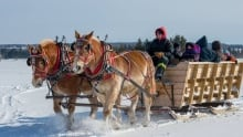 Great Northern Adventures sleigh rides P.E.I.